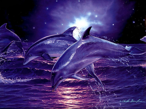 Dolphins-in-the-Night-dolphins-39705383-500-375.jpg