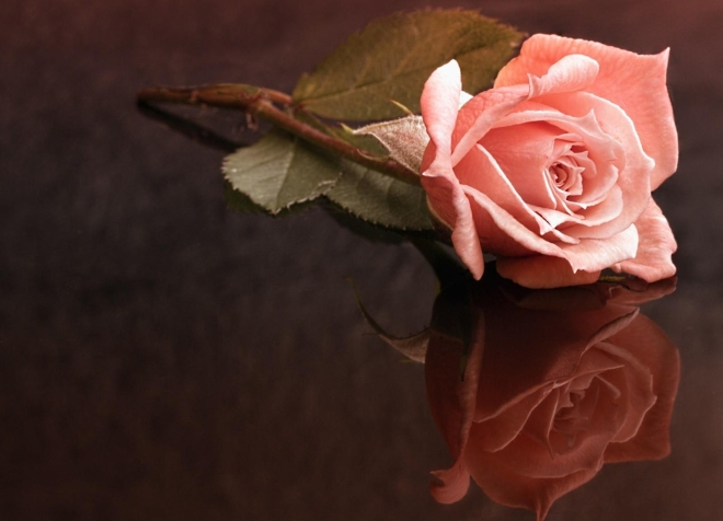 rose-loneliness-surface-reflection-1046738-wallhere.com