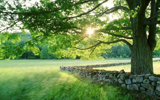 nature-landscapes-fields-grass-trees-sun-sunlight-spring-seasonal-stone-fence-rocks-leaves-images-153877