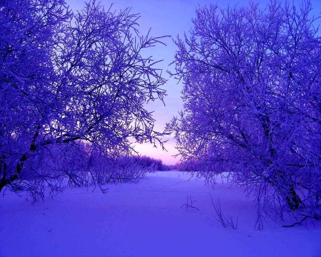 sunlight-trees-landscape-nature-sky-snow-786385-wallhere.com